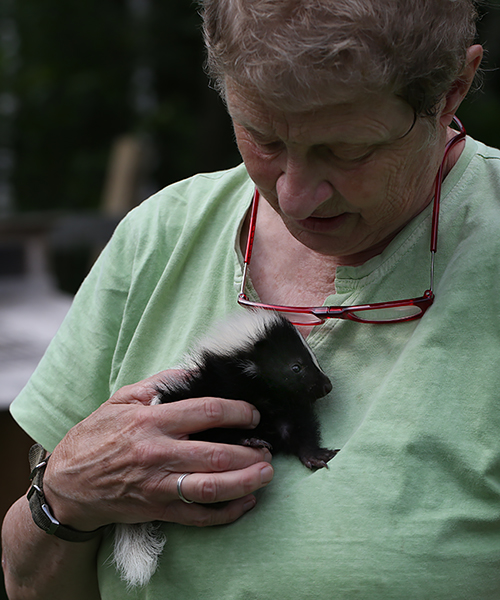 7-13-17 baby skunk 169