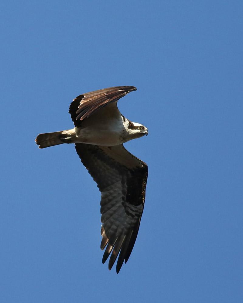 email-osprey 014