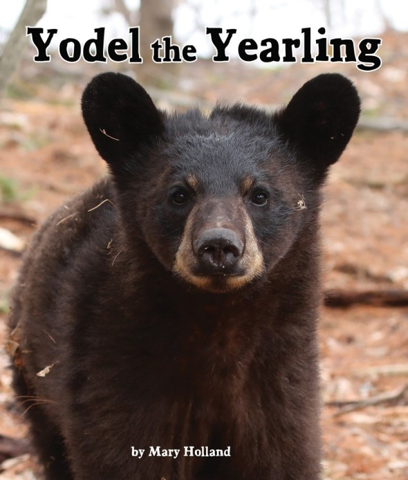 YODEL THE YEARLING book cover for blog