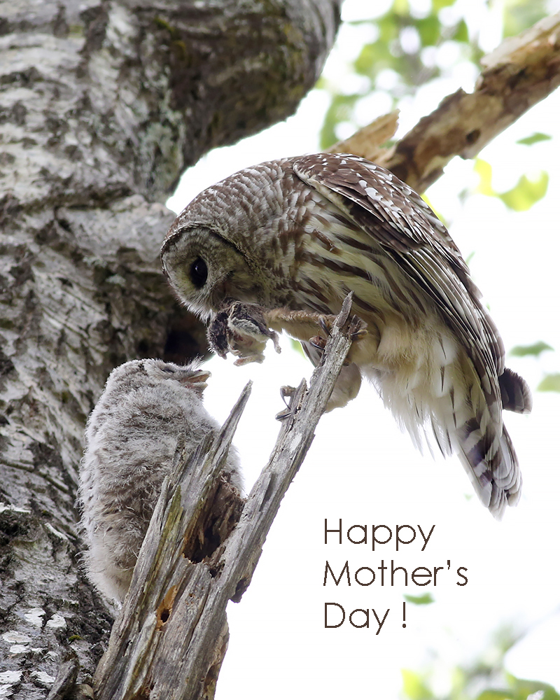 5-13-18 happy mother's day2 291