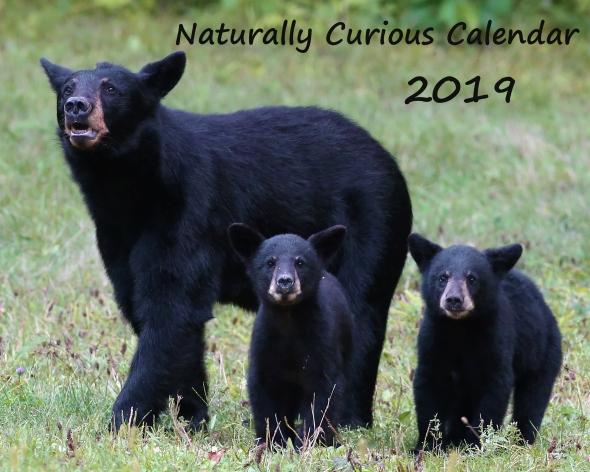 AUGUST black bears 20160828_1568