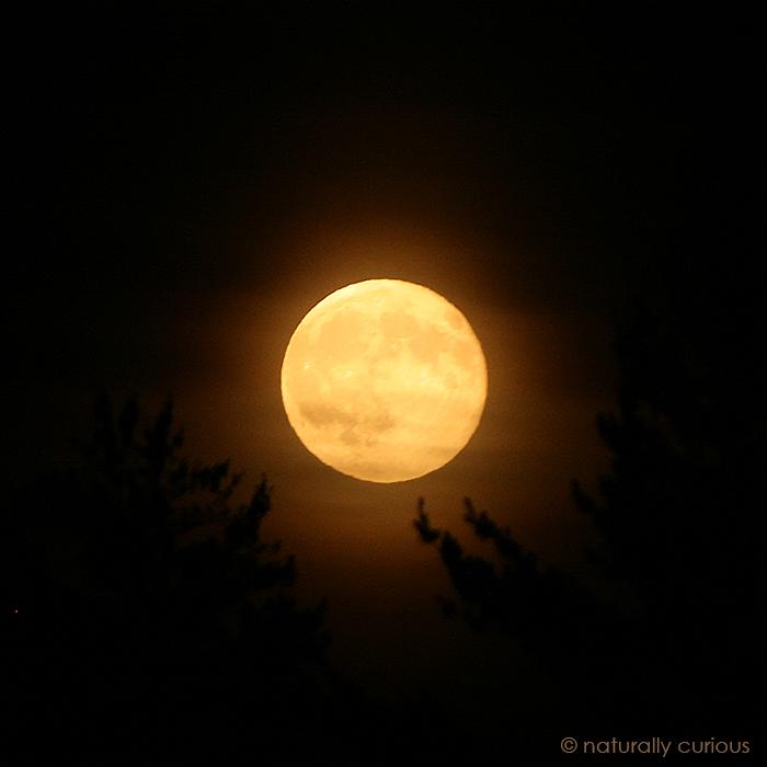 12-21-18 winter solstice IMG_1706