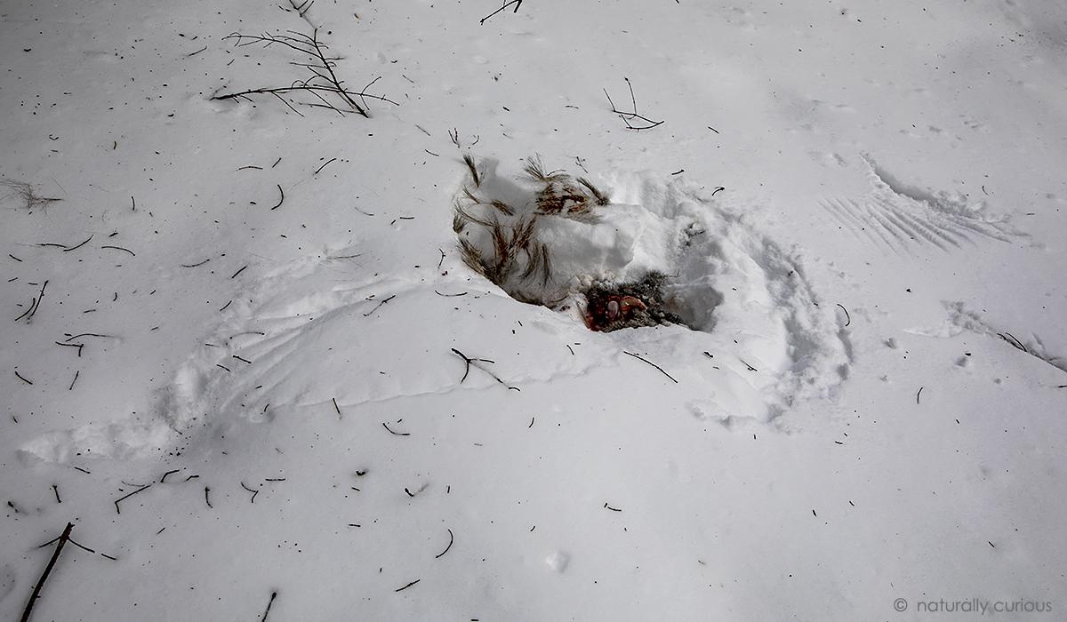 2-7-19 gray squirrel kill_U1A2844