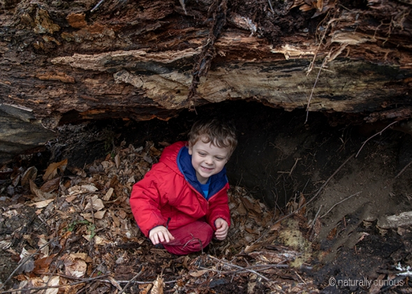 5-24-19 Otis in bear den2 _U1A8010